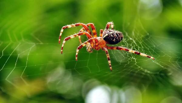 Увидеть паука вечером в доме