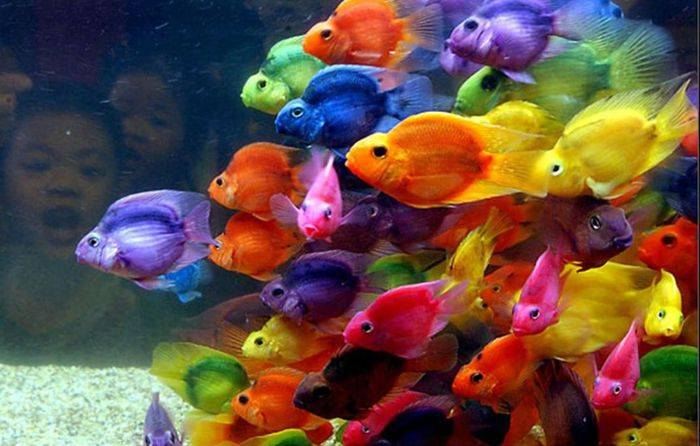 Знак рыбки