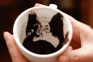 Гадание на кофейной гуще конь