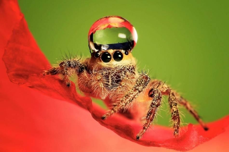 Много пауков в доме примета