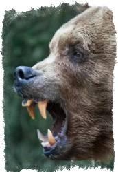 Клык волка оберег