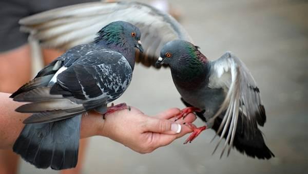 Держать птицу в руках