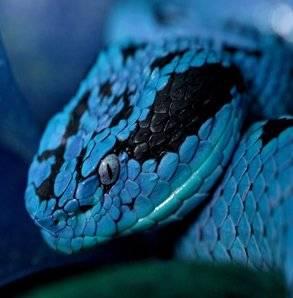 Водолей змея мужчина