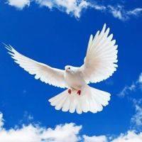К чему голубь стучит в окно