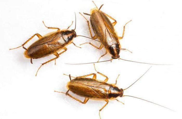 Заговор против тараканов в квартире