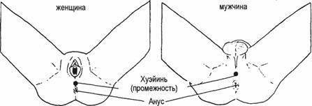 Тантрическая йога
