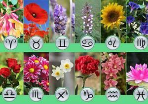 Цветок по гороскопу