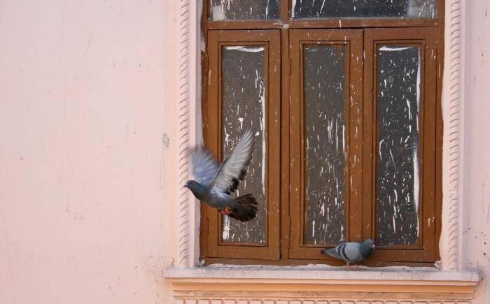Голубь залетел домой примета