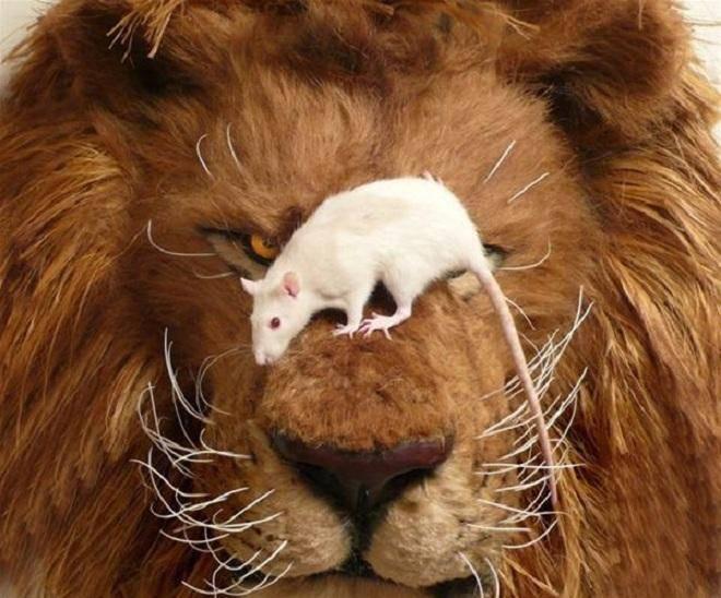 Гороскоп крыса лев мужчина
