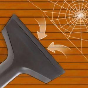 Черный паук дома