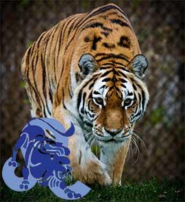 Гороскоп тигр лев женщина