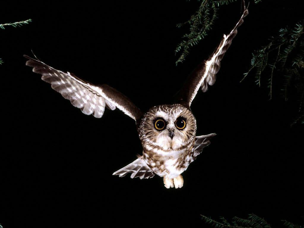 Что символизирует сова