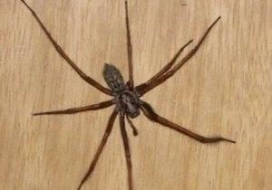 К чему дома появляются пауки
