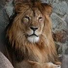 Лев кто подходит по знаку зодиака