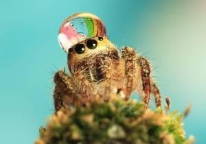 Большие пауки в доме