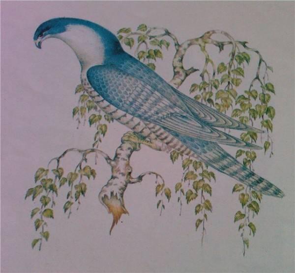 Птица финист