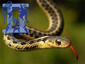 Женщина близнецы змея характеристика