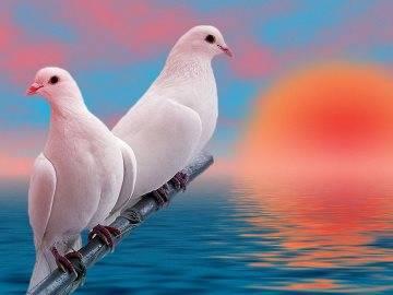 Примета птица залетела в дом голубь