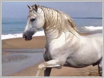 Год лошади характеристика женщина