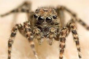 Приметы связанные с пауками