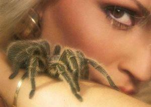Гадание по паукам