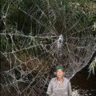 К чему паук ползет по человеку
