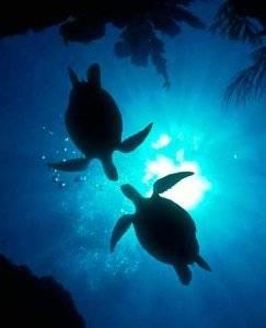 Черепаха значение