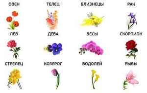 Цветы и гороскоп