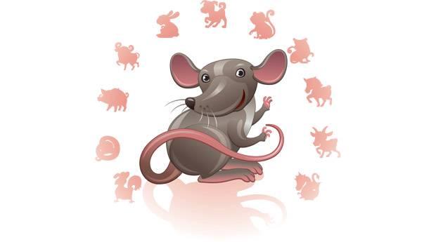Крыса телец