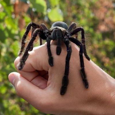 Примета убить паука в доме