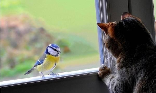 Голубь сел на окно к чему примета