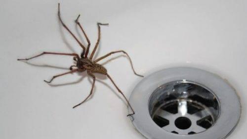 К чему в доме появляются пауки