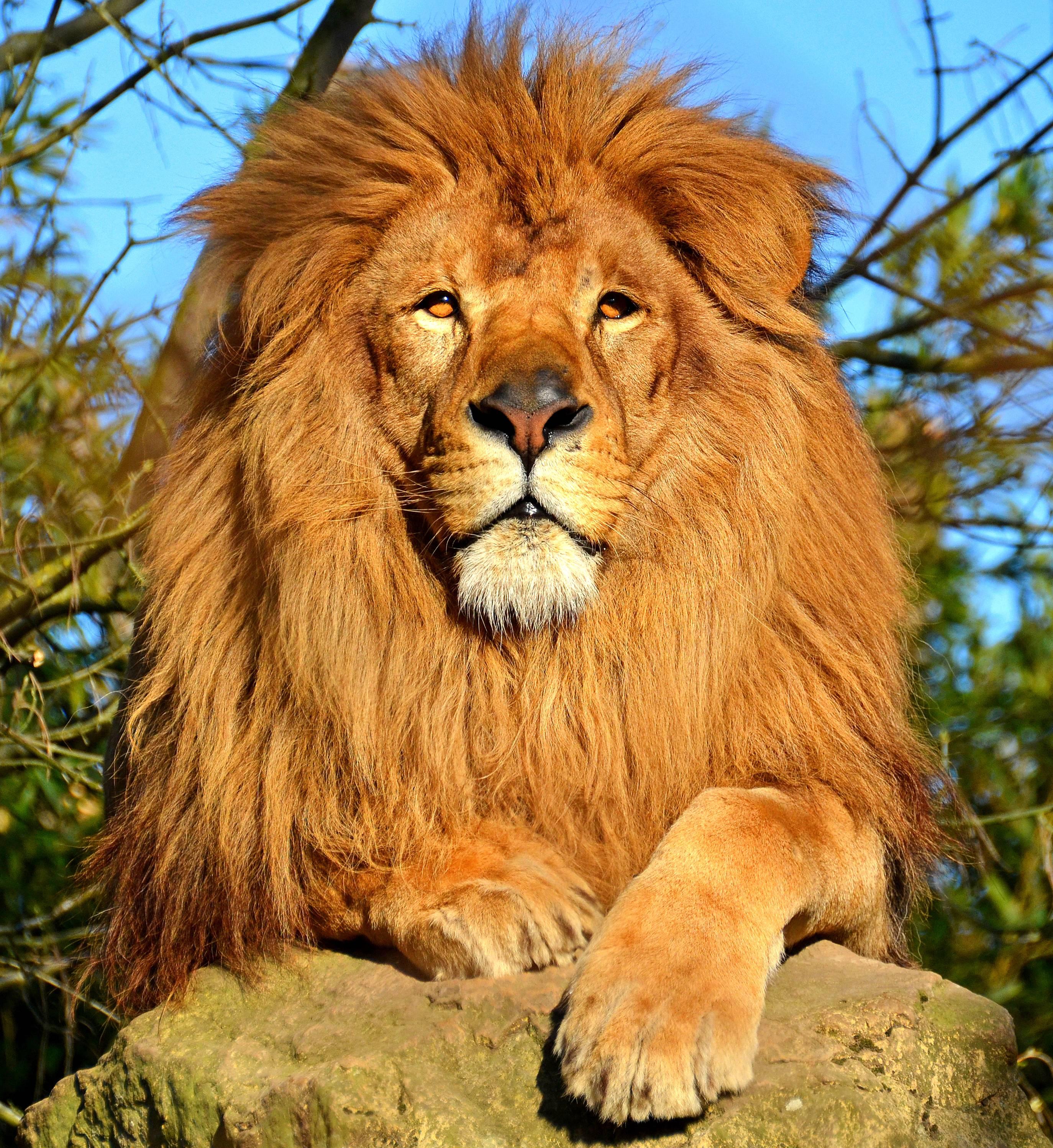 Топаз для женщины льва