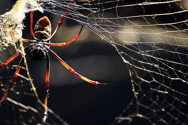 К чему ползет паук