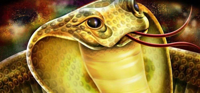 Змея совместимость с другими знаками