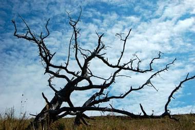Дерево оберег