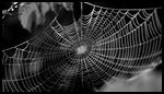 Приметы паутина в доме