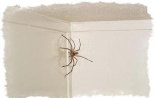 К чему паук в квартире приметы