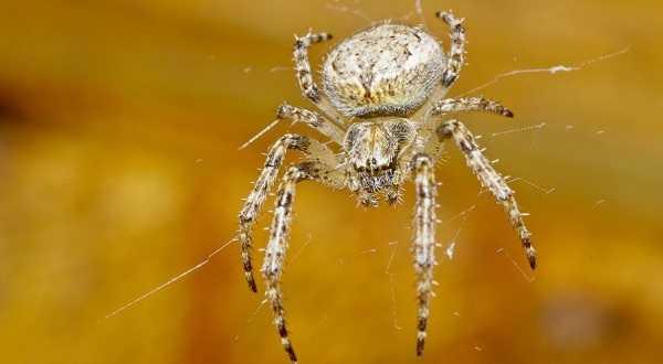 Если паук ползет вниз к чему это