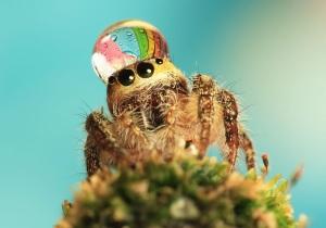 Почему в квартире появляются пауки