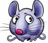 Крыса знак зодиака женщина