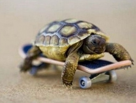 Черепаха на кофейной гуще