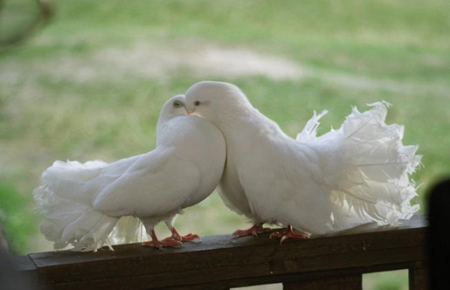 Что означает голубь на подоконнике