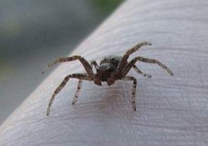 Какие пауки живут в домах